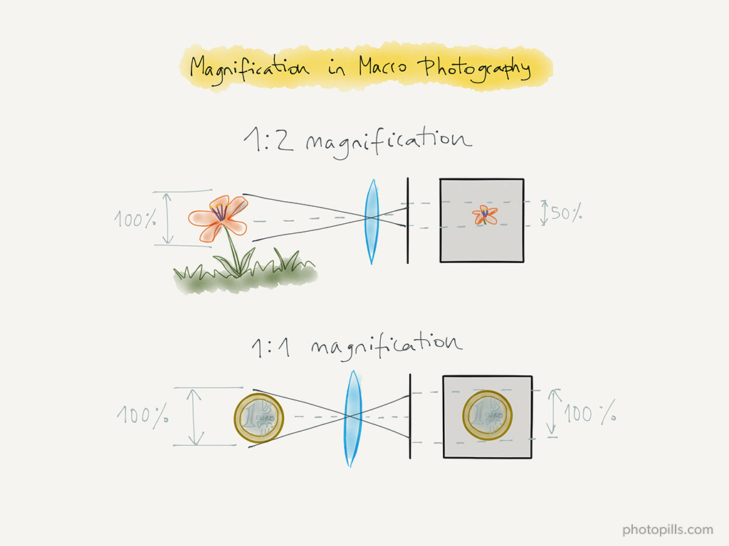 macro photography magnification ratio how to read