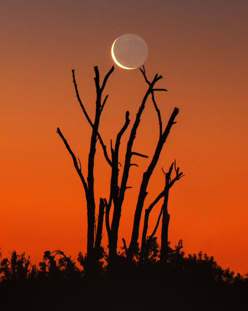 Twighlight earthshine over a silhouette of the vegetation in South Chile by Yuri Beletsky